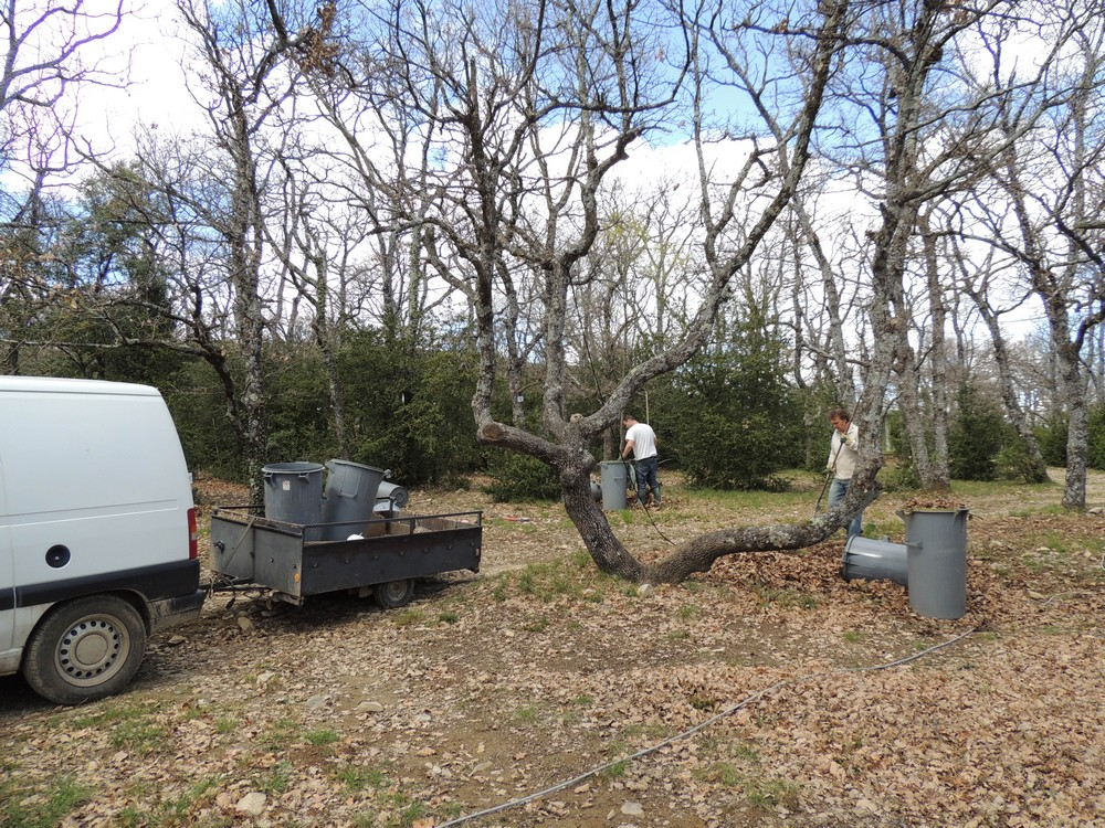 ramassage des feuilles de chênes sur les emplacements