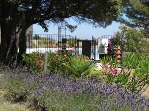 fleurs et lavandes au domaine de briange